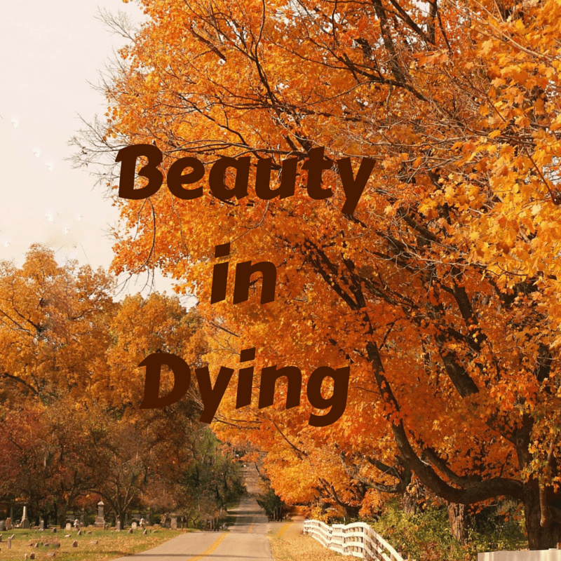 Beauty in Dying