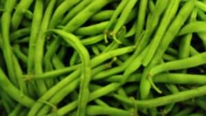 Some of last spring's green bean harvest. My family's favorite! Yum!